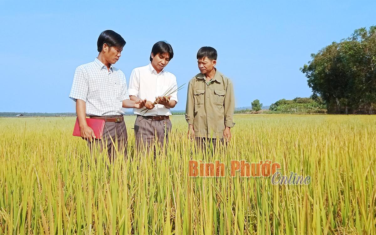 Nâng chất từ chương trình nông thôn mới